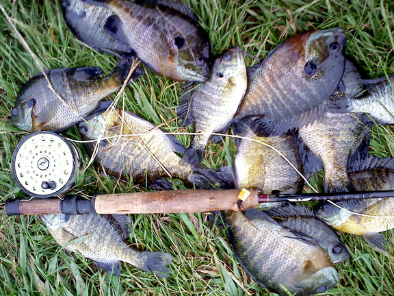 Fly Rod Panfish