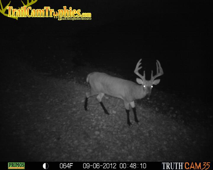 Buck with muddy legs