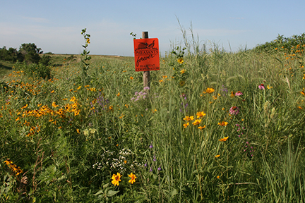 (photo courtesy of Pheasants Forever) An example of the type of habitat work supported by Pheasants Forever. Topics like this will be part of the 2014 State Convention.