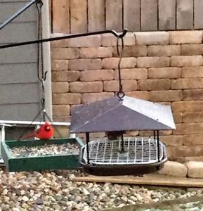 Cardinal perches on platform feeder. (photo by Darial Weisman)