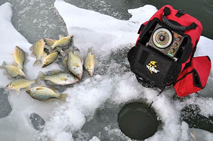 Yellow bass and crappies from Minnewashta last winter.  (photo by Steve Weisman)