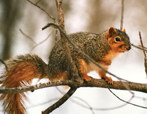 #1b-squirrel-web