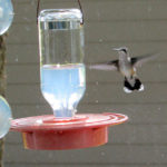 Hummingbird hovers at the window nectar feeder