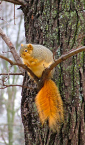 Although fun to watch, squirrels can also be destructive.